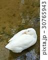 1 1 動物の写真 30765943