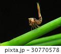 生物 クリーチャー 生き物の写真 30770578