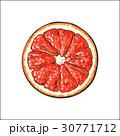 グレープフルーツ 半分 平面図のイラスト 30771712