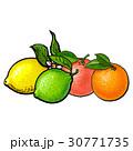 グレープフルーツ オレンジ オレンジ色のイラスト 30771735