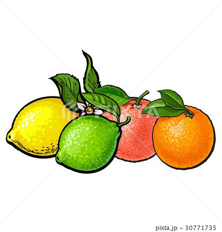 Whole shiny orange, grapefruit, lime and lemon 30771735
