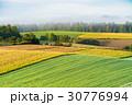 畑 田園風景 秋の写真 30776994