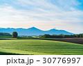 美瑛町 朝 畑の写真 30776997