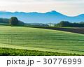 美瑛町 朝 畑の写真 30776999