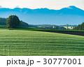 美瑛町 朝 畑の写真 30777001