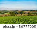 朝 畑 田園風景の写真 30777005