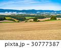 美瑛町 畑 田園風景の写真 30777387