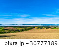 美瑛町 畑 田園風景の写真 30777389
