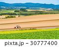 美瑛町 畑 農業の写真 30777400