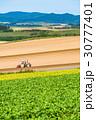 畑 田園風景 農業の写真 30777401