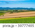 美瑛町 畑 農業の写真 30777405