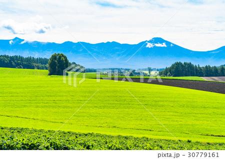 《北海道》美瑛・朝の田園風景 30779161