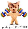 ダンベル わんこ 犬のイラスト 30779801
