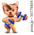 ダンベル わんこ 犬のイラスト 30779809