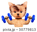 ダンベル わんこ 犬のイラスト 30779813