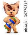 ダンベル わんこ 犬のイラスト 30779817