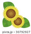 向日葵 30792927