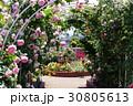 バラ園 バラの花 バラの写真 30805613