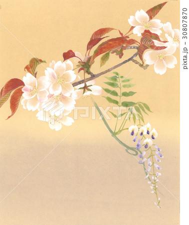 桜のイラスト素材 [30807870] - PIXTA
