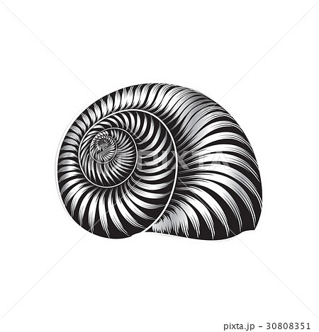 seashell nautilus icon sea shell marine life signのイラスト素材