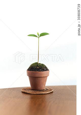 新しい葉, 新芽 30808739