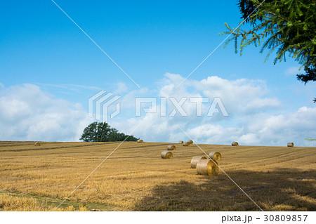 麦ロールが広がる麦畑 30809857