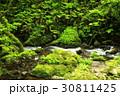 新緑-2017-6 30811425