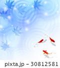 暑中見舞い 和柄 残暑見舞い 金魚 30812581