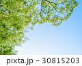 新緑 エコイメージ ピント手前 30815203