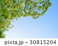 新緑 エコイメージ ピント奥 30815204