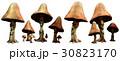 Mushroom folk 30823170