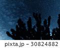 星 樹木 樹の写真 30824882