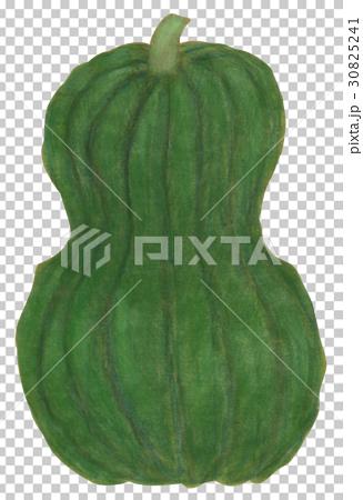 手描き 鹿ヶ谷かぼちゃ 30825241
