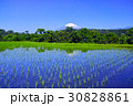 富士山 水田 田の写真 30828861