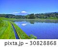 富士山 水田 田の写真 30828868