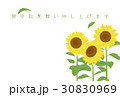暑中見舞い ひまわり 向日葵のイラスト 30830969