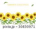 暑中見舞い ひまわり 向日葵のイラスト 30830971