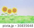 向日葵と草原 水彩 30835648