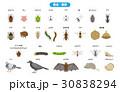 害虫・害獣 30838294