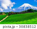 静岡 茶畑 富士山の写真 30838512
