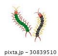 害虫 害獣シリーズ 30839510