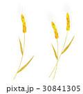 小麦 30841305