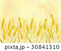 小麦畑 30841310