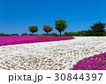 花 シバザクラ 満開の写真 30844397