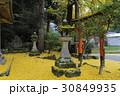 岩戸落葉神社 銀杏の落葉 30849935