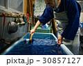 男性 藍染 染物職人の写真 30857127