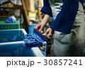 藍染 染物 手捺染の写真 30857241