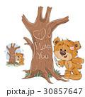 くま クマ 熊のイラスト 30857647