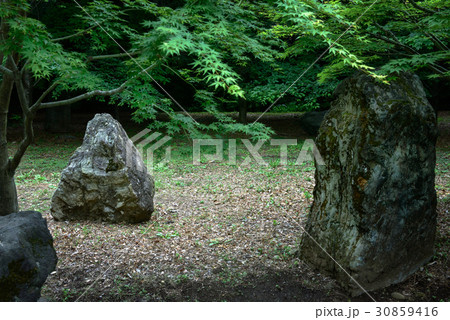日本庭園の景色 30859416