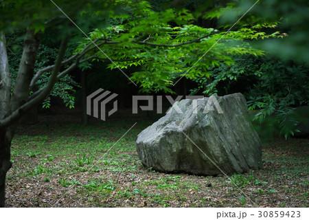 日本庭園の景色 30859423